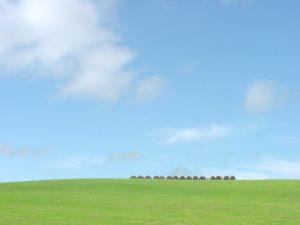 北海道豊富町  豊富町大規模草...